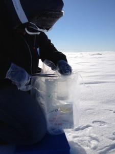 Bettina öffnet das versiegelte Equipment für die Schneeproben (Foto: Elke Ludewig).