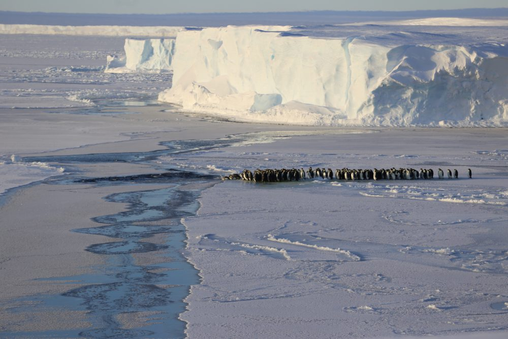 Pinguine auf dem Meereis