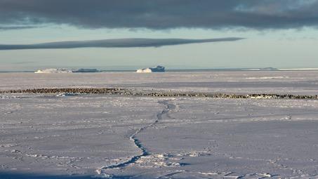 Kaiserpinguinkolonie auf dem Meereis der Atka Bucht im April 2018. Foto: Bernhard Gropp