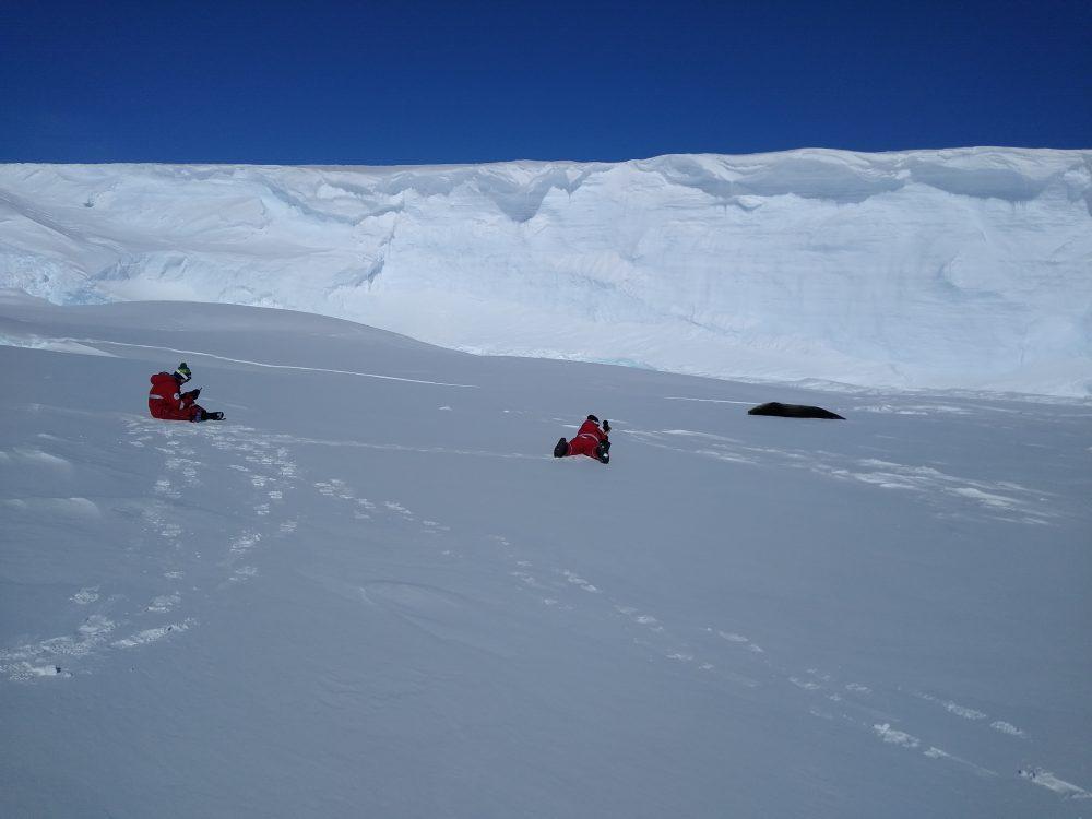 Wissenschaftler und Robbe in Schneelandschaft.