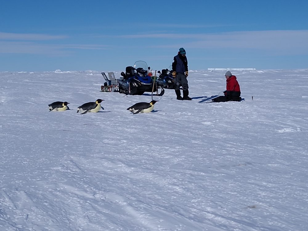 Pinguine vor Schneemobil