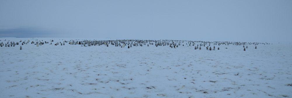 Pinguinkolonie in der Antarktis