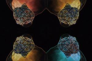 Symmetrien - Teil einer aktuellen Ausstellung von Kerstin Berthold in Berlin. Bild: Kerstin Berthold.