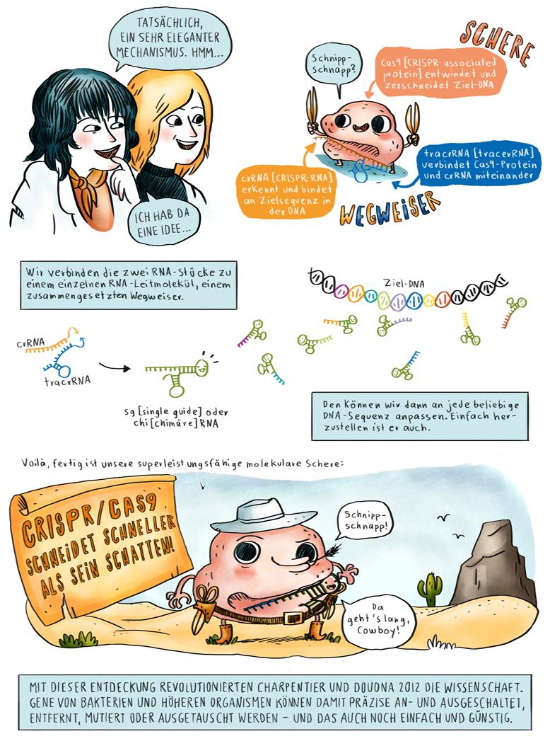 Helmholtz Wissenschaftscomic Molekularbiologie CRISPR Cas9 Carpentier Doudna Genome Editing