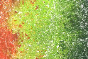 Bakterien auf der Pilz-Autobahn. Bild: UFZ