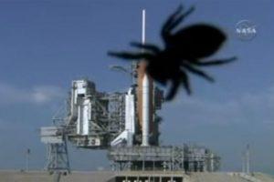 Größer als das Space Shuttle? Eine Spinne kriecht Anfang 2008 über die NASA-Kamera, bevor die Mission STS-122 das europäische Forschungslabor Columbus zur ISS brachte. Bild: NASA.