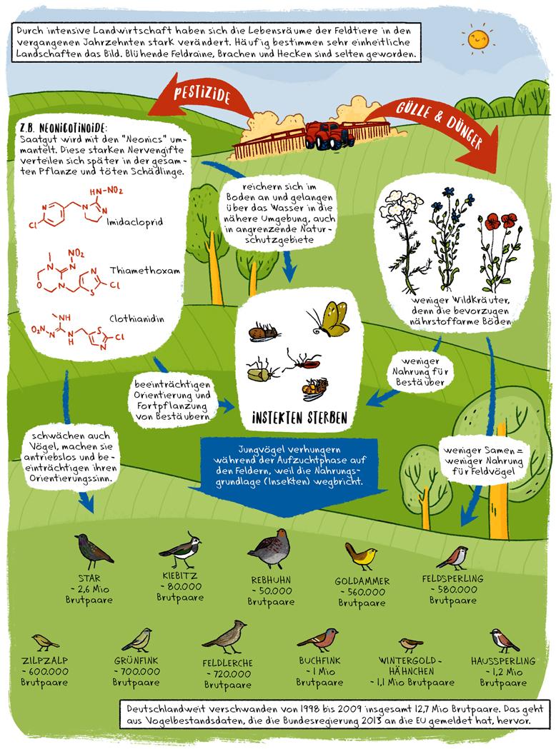 Helmholtz Wissenschaftscomic Ökologie Vogelsterben Insektensterben Neonicotinoide Agrarökologie