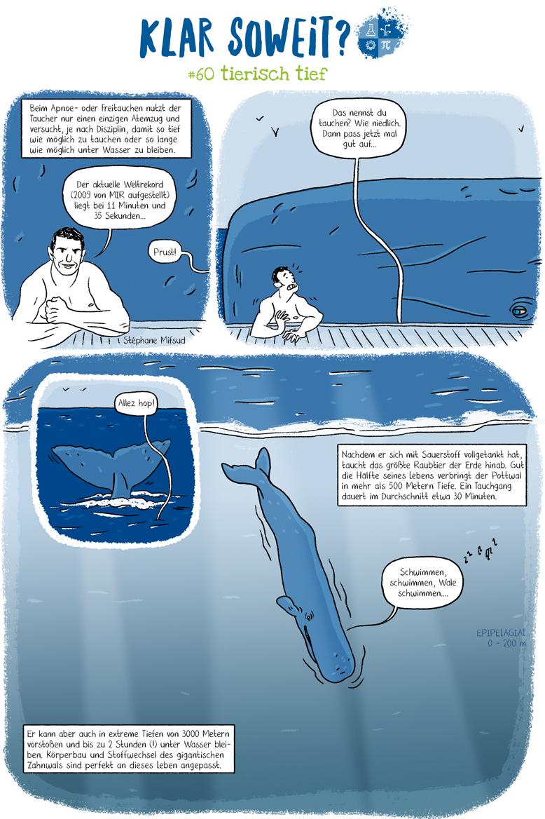 Wale Meeressäuger Tauchen extreme Lebensräume Zoologie Biologie Tiefsee