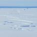 Übereinander geschobene Meereisschichten