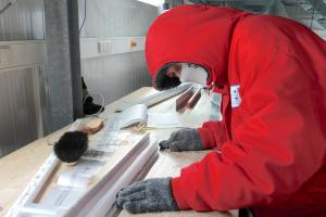 Expedition ins Eis (labor) – Auf Klima-Spurensuche in der Ostantarktis