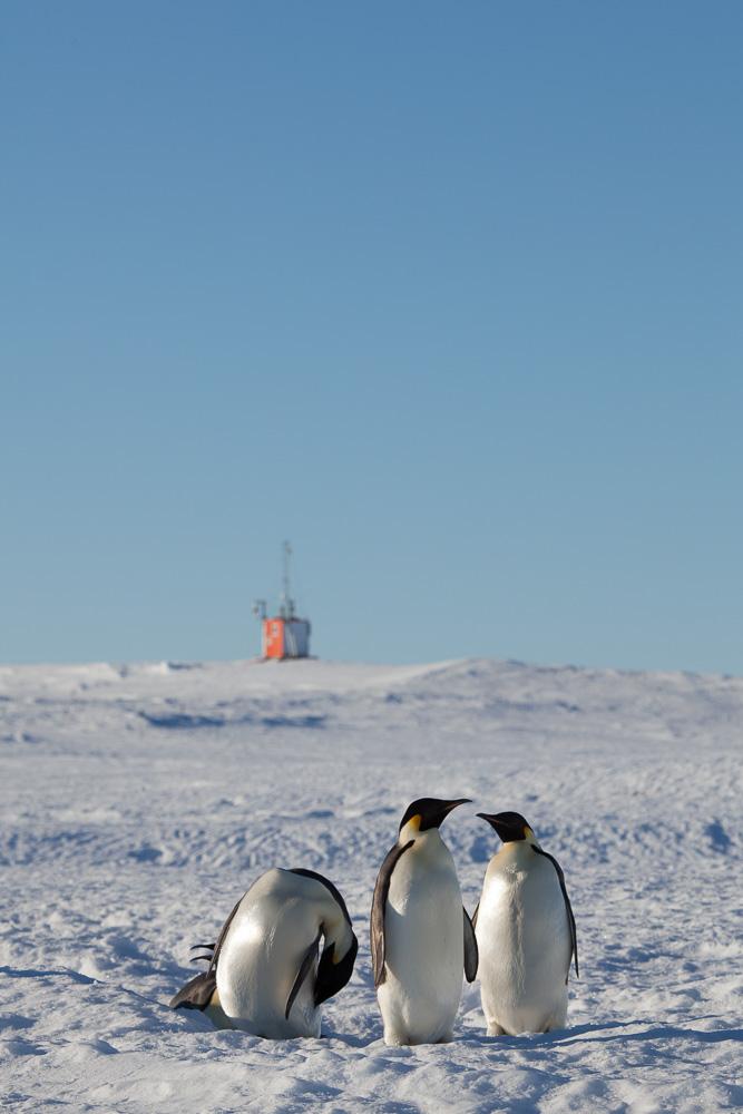 Drei Grazien vor dem SPOT-Observatorium