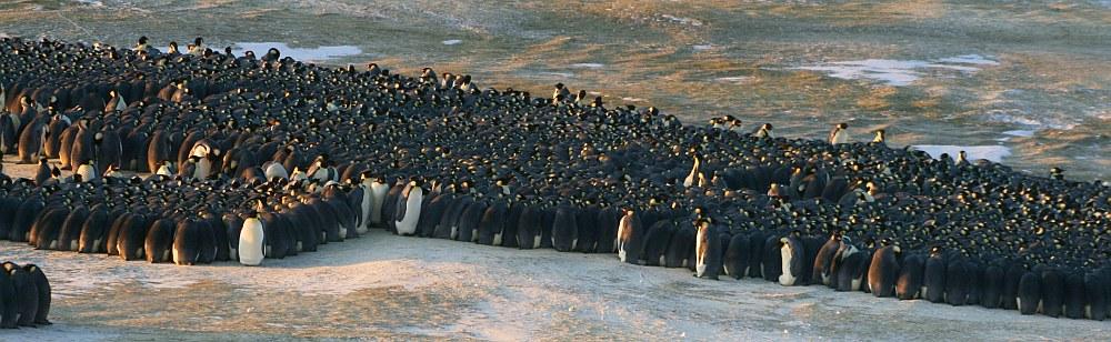 Ein Pinguin-Huddle