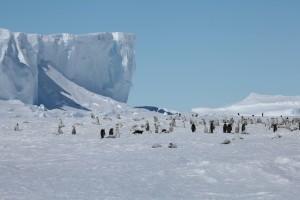 Ein Teil der Pinguinkolonie auf dem Meereis, im Hintergrund die Kante des Ekströmisen