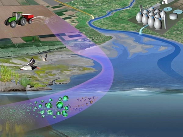 Grafik Eintragswege von Nährstoffen in Flüsse