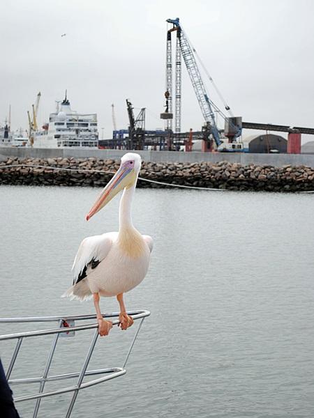 Pelikan sitzt auf einem Schiffsbug