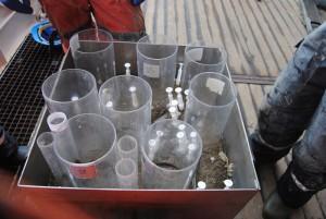 Monika Kędra und Maeve McGovern sieben Tieren aus dem Schlamm und ziehen eine Spur von schlammigem Wasser hinter sich her. Foto: Kirstin Werner