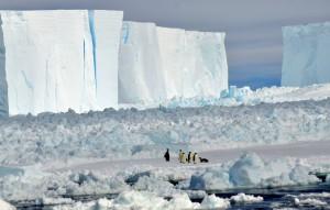 Pinguine beobachten das Schiff aus sicherer Entfernung. Foto: Emilio Riginella