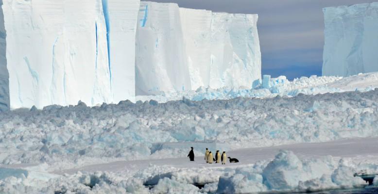 Pinguine beobachten das Schiff aus sicherer Entfernung. Foto: Emilio Riginella.