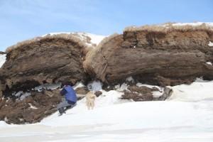 Dani und Feja untersuchen den abbrechenden Permafrostboden an der Küste von Samoylov. Foto: K. Kohnert