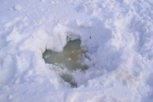 Sea ice algae below snow cover. Photo: Roland Sarda-Esteve