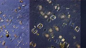Eine Entdeckungsreise unter dem Mikroskop