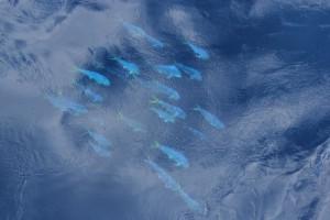 Gelbflossen-Thunfisch Schwarm über dem Ampere Seamount Plateau. Foto: Pauhla McGrane